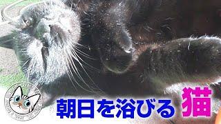 【Jean & Pont 1503】朝日を浴びるジャンくんとポンちゃん 黒猫にカボチャ 2018/10/7 ジャン ポン thumbnail