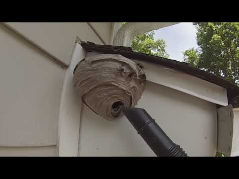 Baldfaced Hornet Nest Removed From Under House Overhang First Job Of