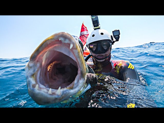 A Big Surprise Spearfishing in Shallow Water |Spearfishing Life 🇬🇷