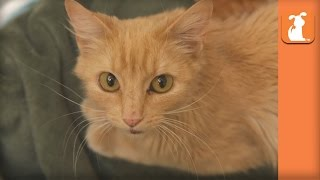 Homeless Kittens Born At Mall Loading Dock Rescued With Mother