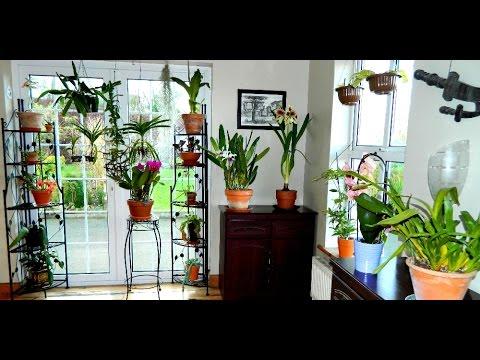 Winter House Plant Display - tour around my kitchen