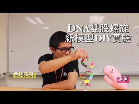 科普動手做-DNA雙股螺旋紙模型DIY實驗