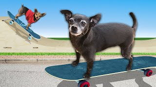 Teaching Our Dog How to Skateboard for the First Time  PawZam Dogs