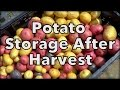 Potato Storage After Harest: How To Keep Potatoes From The Garden
