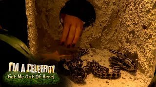Emily's VERY Close Encounter in Viper Pit Bushtucker Trial | I'm A Celebrity... Get Me Out Of Here!