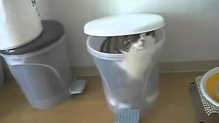 Смешные коты и кошки. Кот в мусорном ведре!