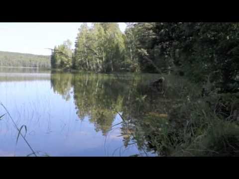 Förord och Naturfilm Hälsingland