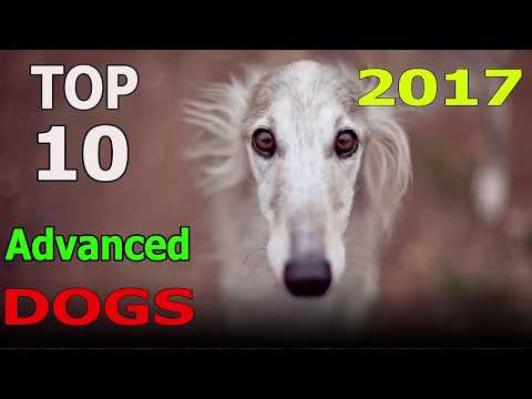 Top 10 Advanced Dog Breeds 2017 | Top 10 animals