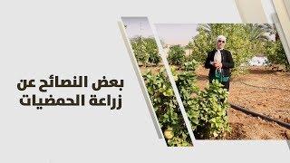 م. أمل القيمري - بعض النصائح عن زراعة الحمضيات