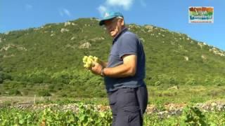 2 Agricoltura Pantesca