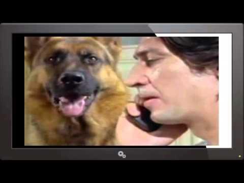 Kommissar Rex Staffel 1 Folge 5