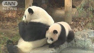 上野動物園のジャイアントパンダ「シャンシャン」の観覧が1日から先着順...