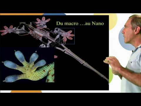 Nature et Bio-inspiration à l'échelle Nanométrique