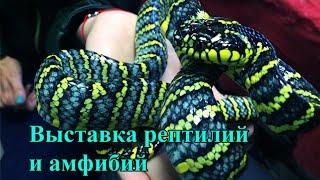 Московская выставка рептилий и амфибий