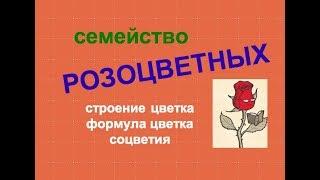 Строение цветка семейства розоцветные
