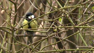 Les oiseaux des campagnes disparaissent massivement