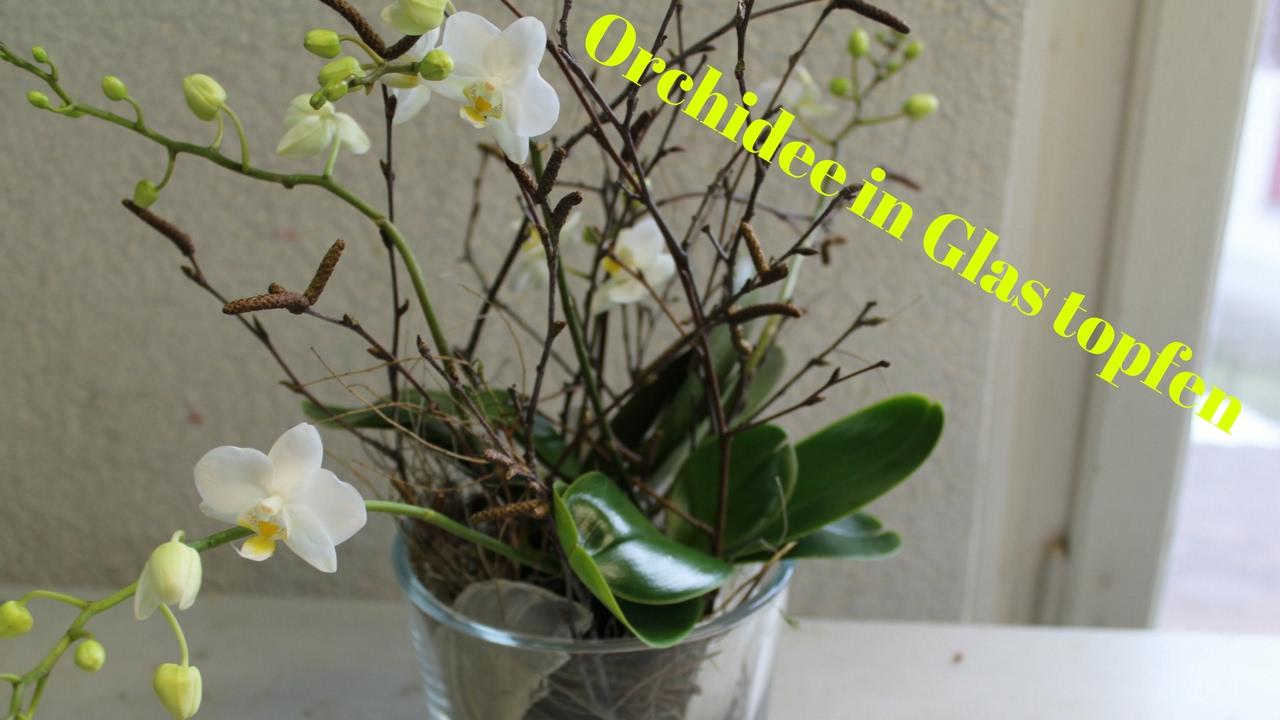 DIY Orchidee im Glas simpel  einfach eintopfen  YouTube