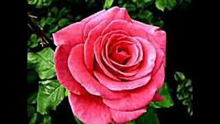 Que Inveja tens Tu da Rosa - Musica tradicional do Alentejo