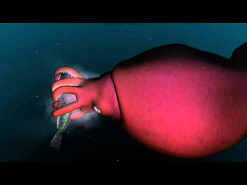 Mysterious World Of The Colossal Squid