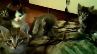 Котятки в дар Улан-Удэ