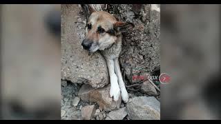 Застрявшую в камнях собаку, спасли работники судостроительного завода