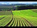Продам земельный пай земли сельхозназначения в Штурмовом 75 соток