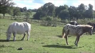 promenade: une ferme en creuse