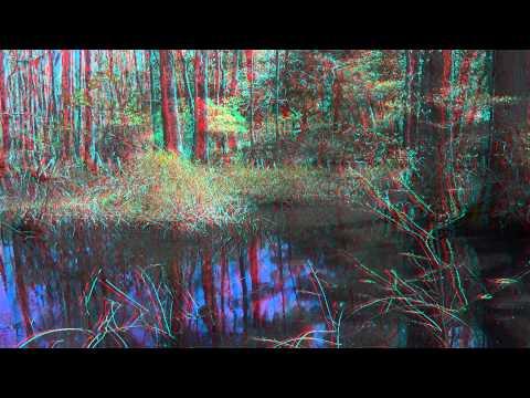 The Virginia Beach Swamp In 3D