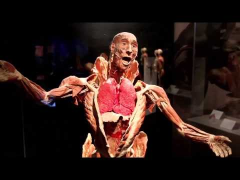 BODY WORLDS Vital at the Buffalo Museum of Science
