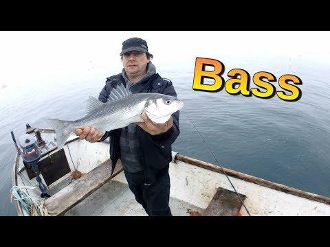 Bass Fishing With A Sidewinder Skerries Eel