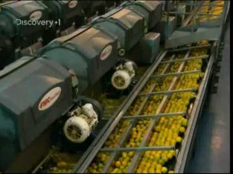 How Orange Juice Is Made - YouTube