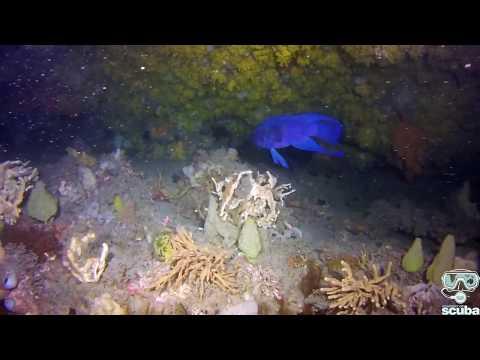 PADI Melbourne Diver Specialty