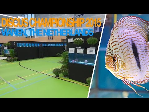 Discus Fish Championship In The Netherlands 2015