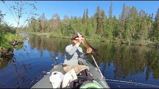ЕСТЬ ТРОФЕЙ ! Сплав Рыбалка на Лесной Реке. Рыбалка с на Спиннинг с Лодки. Летняя Рыбалка в Карелии