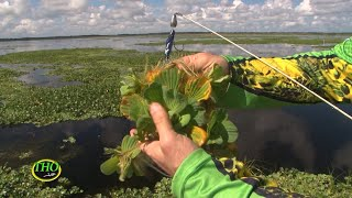 Everything you ever wanted to know about, and how to Fish the different grasses in your lake