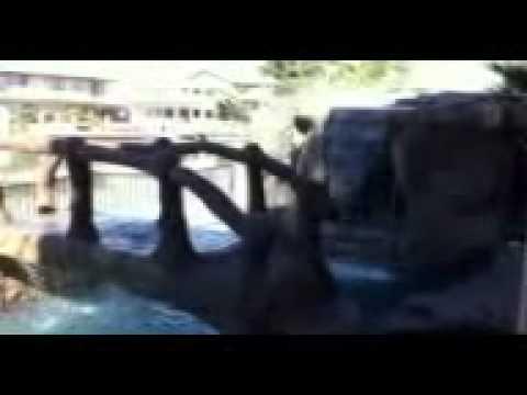 Oasis custom pools Spring Valley