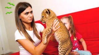 Download Король лев в нашем доме 😱! Дима стал симбой 🦁 Mp3 and Videos