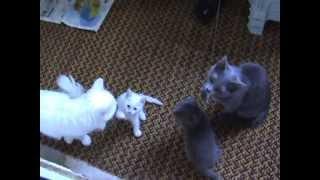 Кошки 2 серых 2 белых