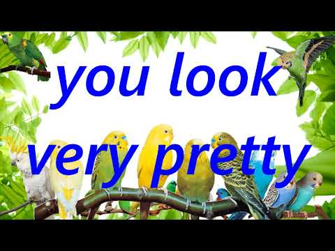 "Teach your bird to say ""you look very pretty"" male human sound record parrot budgie talking training"