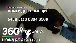 Инвалид по зрению из Екатеринбурга собирает деньги на лечение своей собаки-поводыря