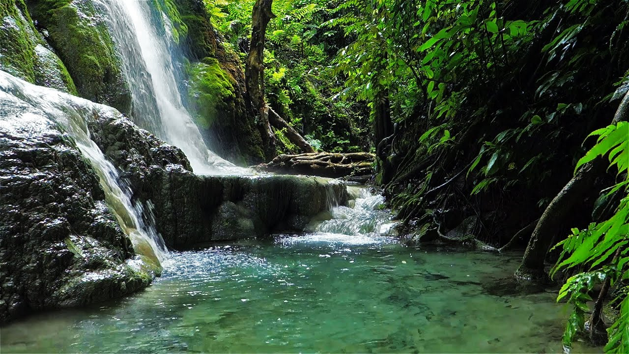 Jungle Waterfall in Full HD - Remake of Forest Spray - YouTube
