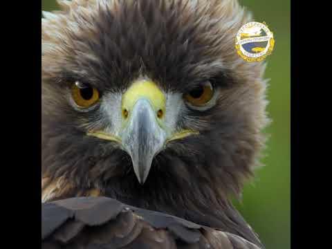Присоединяйся к Всероссийскому Обществу Охраны Природы