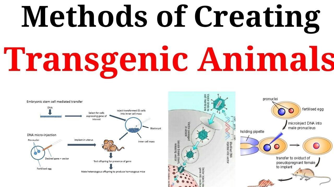 Methods of creating transgenic animals in hindi youtube methods of creating transgenic animals in hindi ccuart Images
