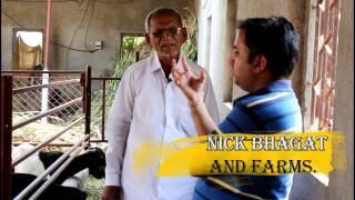 Balasaheb Hagare Usmanabadi Cross Bore Goat Farm Baramati