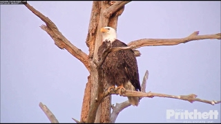 SWFL Eagles ~ A  little Lovin' at the Pond 1....