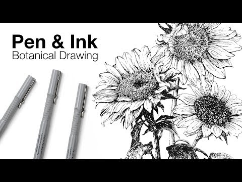 Pen and Ink Botanical Drawing