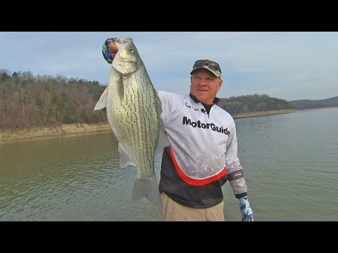 FOX Sports Outdoors PREVIEW #22 - 2018 Norfork Lake Arkansas Hybrid Striper Fishing