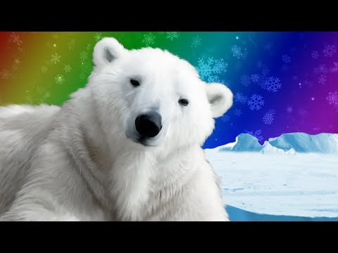 Polar Bears for Kids | Wild Animals | Arctic Animals