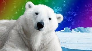 Polar Bears for Kids   Wild Animals   Arctic Animals