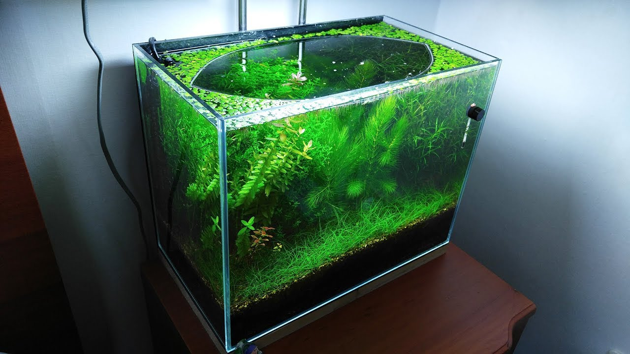 10-months-update-melting-pot-of-shrimps-no-filter-no-co2-no-ferts-5-gallon-nano-tank